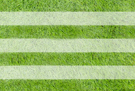 sideline: A realistic textured grass football   soccer field
