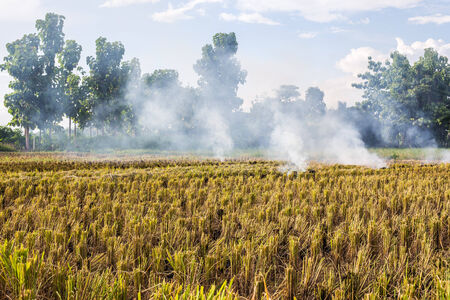 Burning of rice stubble burning straw in rice farmers in Thailand