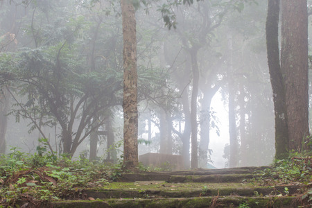 fog in highland tropical forest. photo