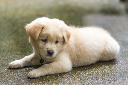 sad puppy. Stock Photo