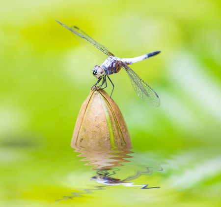 close up of a happy looking dragonfly resting on a flower bud . photo