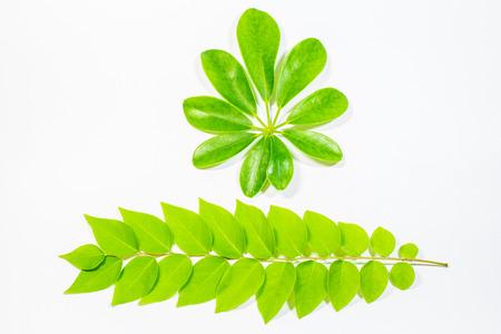 leaf on white background. photo