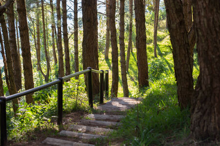 Photograph of a trail tracking deep into the shadowed forest. photo