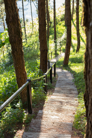 shadowed: Photograph of a trail tracking deep into the shadowed forest. Stock Photo