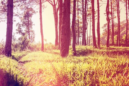shadowed: Photograph of a trail tracking deep into the shadowed forest, vintage retro style.