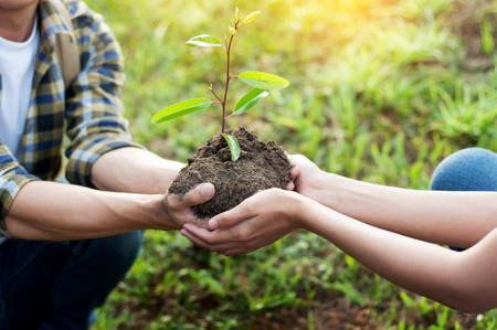 couple planting and watering a tree together on a summer day in park, volunteering, charity people and ecology Environment and ecology concept Stock Photo