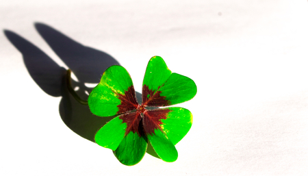 four-leaf clover with shadow in the shape of butterfly Stock Photo
