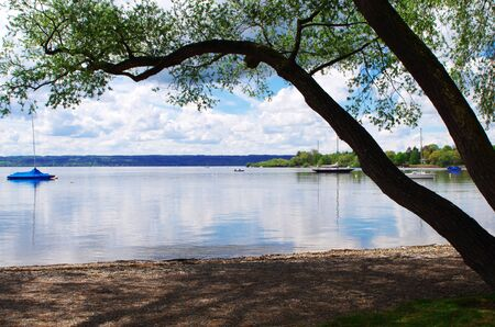 Trees at Lake Ammersee in the spring