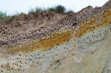 Landscpae d & # 39 ; une colonie de sternes sur une côte escarpée de la mer baltique Banque d'images - 82984217