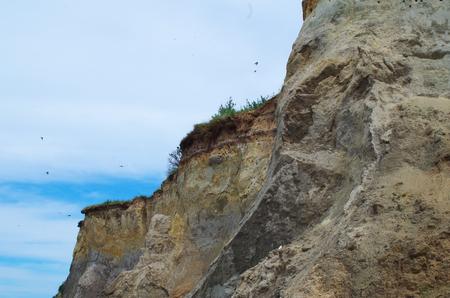 Landscpae d & # 39 ; une colonie de sternes sur une côte escarpée de la mer baltique Banque d'images - 83002608