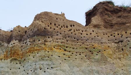 Landscpae d & # 39 ; une colonie de sternes sur une côte escarpée de la mer baltique Banque d'images - 83002609
