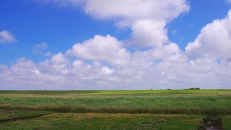 westerhever: Salt meadows of the North Sea