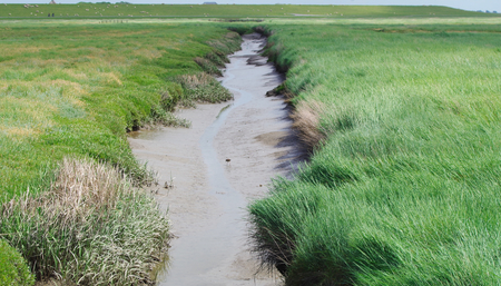 westerhever: Channel in a salt meadow at the North Sea Stock Photo