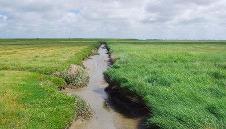 Channel in a salt meadow at the North Sea Stock Photo