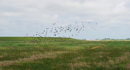 Sobre um prado de sal dos pássaros voadores do Mar do Norte Foto de archivo - 83665510