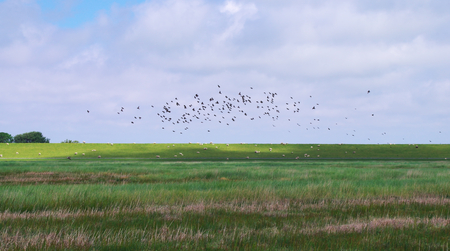 Sobre um prado de sal dos pássaros voadores do Mar do Norte Foto de archivo - 83665511
