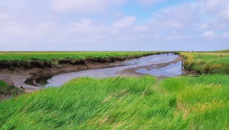 westerhever: Nature reserve Salt meadows on the North Sea near Westerhever Stock Photo