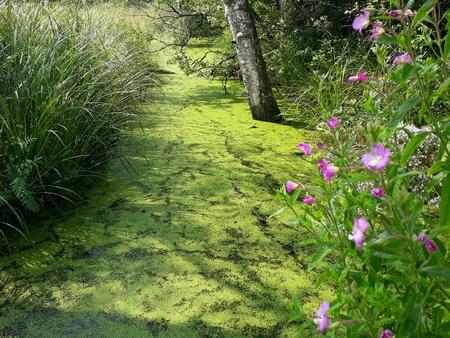 Moor in Benediktbeuern Фото со стока