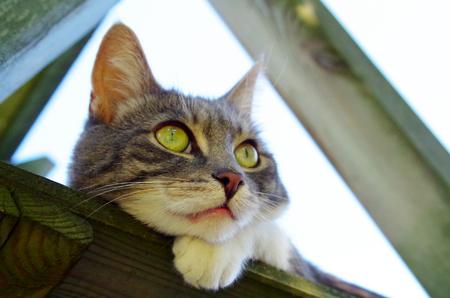 Portrait of a domestic cat Standard-Bild - 112715594