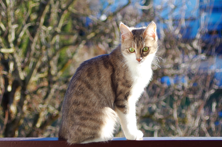 Young domestic cat in the sun