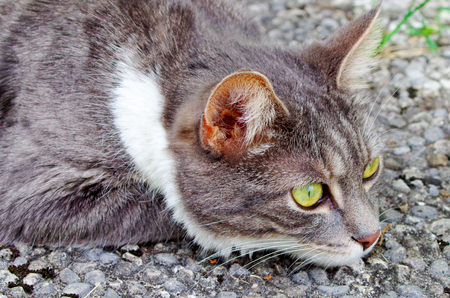 Portrait of a domestic cat Standard-Bild - 112715659