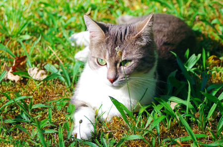 Young domestic cat in the grass Standard-Bild - 112715647