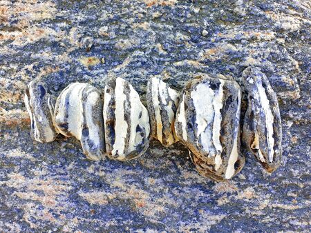 Flints with stripes in a row on a rock