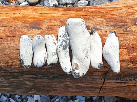 White flints placed in a row on a root