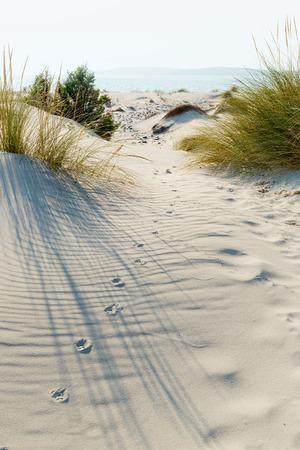animal tracks: Tracce di animali nella sabbia tra le dune.