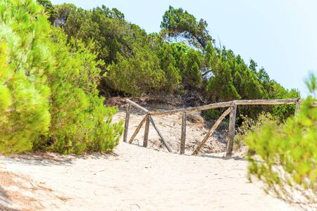 wooden railings: Sandy path with wooden railings in the coniferous forest.