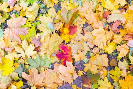 fall of the leaves: Multi-colored autumn leaves lying on the ground