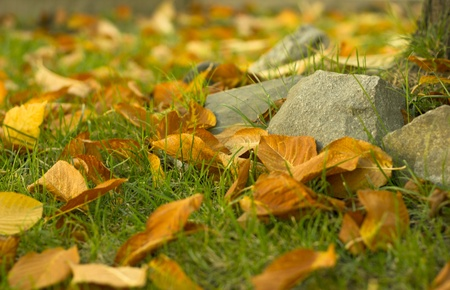 fallen autumn leaves on grass photo