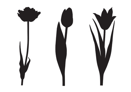 flower silhouette: Three tulip silhouette
