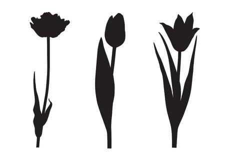 Three tulip silhouette