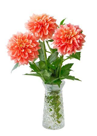 dalia: Tres dalias rojas en el jarrón aislados en blanco