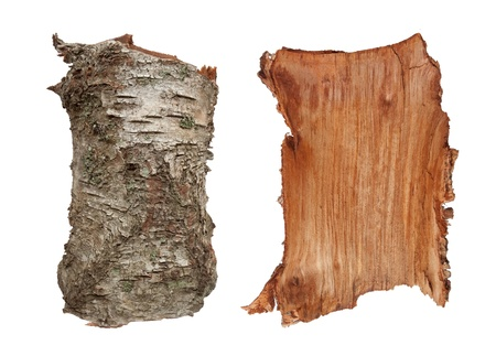 Old birch tree bark texture, very detailed, inner and outer side. Isolated on white