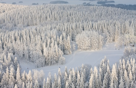 Winter forest with frosty trees and skiers, aerial view. Kuopio, Finland photo
