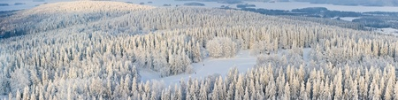 Panoramic aerial view of winter forest with frosty trees and skiers. Kuopio, Finland photo