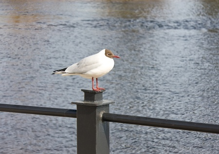 Seagull sitting on metal post against water background photo