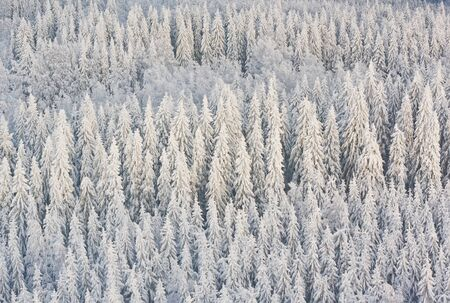 Winter forest with frosty trees, aerial view. Kuopio, Finland photo