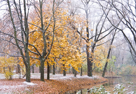 Maple Tree and lake under snow in autumn park