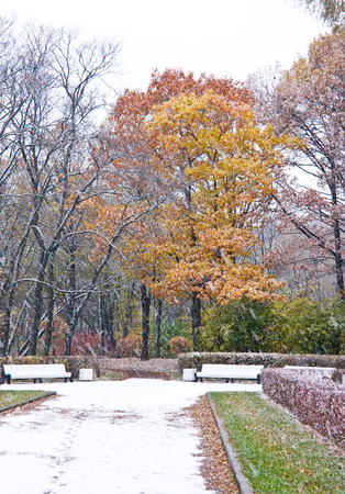 Trees under snow in autumn park