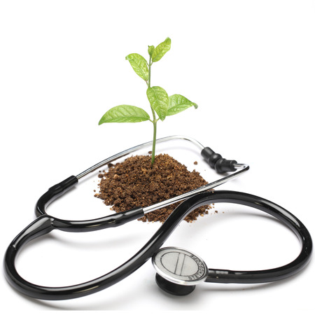 stethoscope: Young plant and stethoscope on white