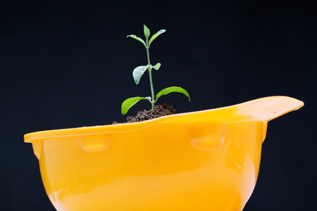 Green baby plant on a yellow  headwear Stock Photo