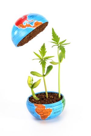 crecimiento planta: Planta de crecimiento-Evaluaci�n