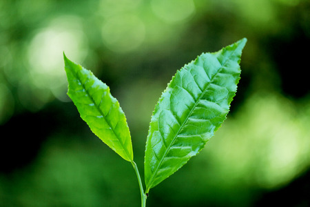 Close up of green leaves against green background