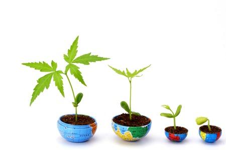 pflanze wachstum: Pflanzenwachstums Bewertung