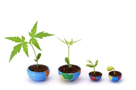 Plant growth- Evaluation Stock Photo