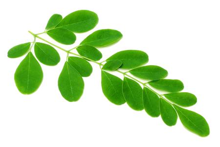 흰색 배경 위에 식용 모 링가 잎