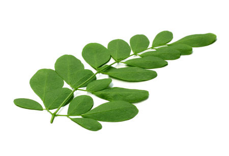 moringa leaves over white background